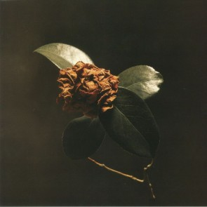 YOUNG SICK CAMELLIA (LP)